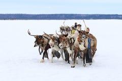 Transport traditionnel des peuples de la Sibérie du nord Photographie stock