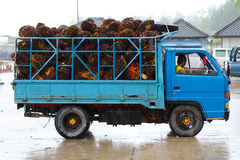 Transport of tropical fruits in Thailand. KOH KHO KHAO, THAILAND - NOV 04: Unidentified people transporting tropical fruits on the van to the Koh Kho Khao Island Stock Photos