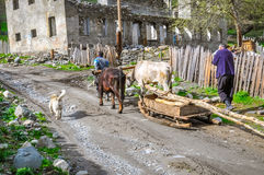 Transport of wood by cows in Georgia Stock Photos