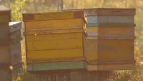 Transportable yellow beehives in marshland stock footage