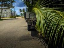 Transportando as folhas do coco Fotografia de Stock Royalty Free