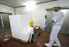 Transportando caixas do poliestireno imagens de stock royalty free