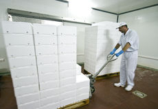 Transportando caixas do poliestireno fotos de stock royalty free