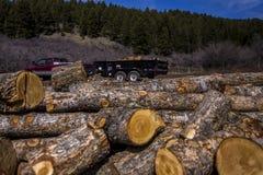 Transportando logs Foto de Stock Royalty Free