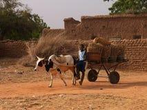 Transportation. A local transportation in mali Stock Image
