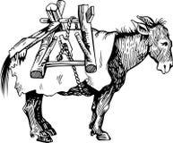 Transportation donkey Stock Image