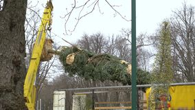 Transportation of fir tree by crane. Preparing trees for new landscape design in city park. nature, urban life and transportation stock video footage