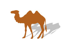Transportation Goods by Camel. Worldwide Warehouse Stock Image