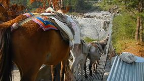 Transportation of goods on mules. Across hanging bridge in the Himalayas. Nepal stock video