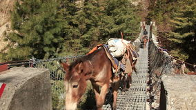 Transportation Goods Mules Bridge Himalayas. Transportation of goods on mules across hanging bridge in the Himalayas. Nepal stock footage
