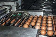 Industrial plant selection for egg Stock Photo