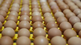 Transportation industrial plant selection for egg stock video