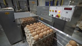Eggs automated sorting in factory. Transportation and industrial plant selection for egg stock video footage