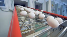 Eggs a going on the factory conveyor. Wide angle. Transportation and industrial plant selection for egg stock footage