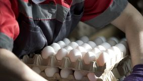 Female hands sorting eggs in the factory. Transportation and industrial plant selection for egg stock footage