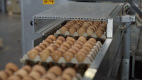 Transportation Eggs for automated sorting. Transportation and industrial plant selection for egg stock video footage
