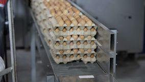 Transportation Eggs for automated sorting. Transportation and industrial plant selection for egg stock video