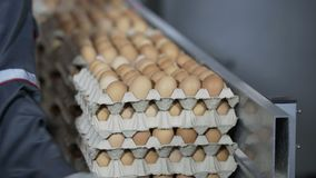 Transportation Eggs for automated sorting. Transportation and industrial plant selection for egg stock footage