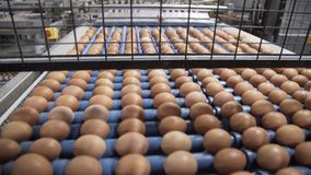 Transportation and industrial plant selection for egg. Wide angle stock video footage