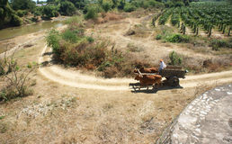 Transportation by ox-cart Royalty Free Stock Photography