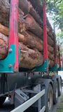 Transportation of tree trunks Royalty Free Stock Image