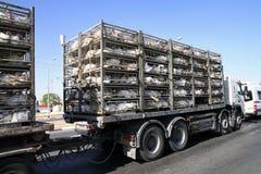 Transportation turkeys Stock Photo