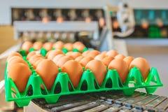Transportband som transporterar spjällådor med nya ägg Arkivbild