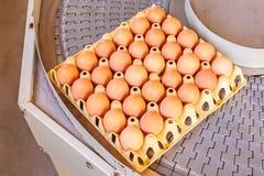 Transportband som transporterar spjällådor med nya ägg Royaltyfri Foto