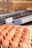Transportband som transporterar spjällådor med nya ägg Royaltyfri Fotografi