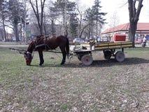 Transporte aciganado no parque fotografia de stock royalty free