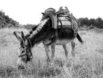Transporte anticuado Fotos de archivo