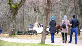 Transporte conduzido cavalo com turistas video estoque