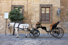 Transporte de cavalos Fotografia de Stock Royalty Free