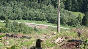 Transporte de la madera del bosque almacen de video