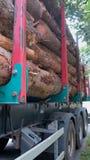 Transporte de los troncos de árbol Imagen de archivo libre de regalías