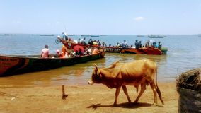 Transporte de madera del lago del barco de la canoa en el lago Victoria imagenes de archivo