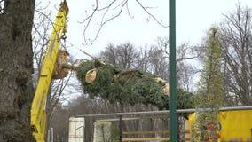 Transporte del árbol de abeto por la grúa almacen de metraje de vídeo