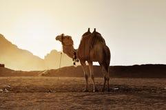 Transporte del desierto Foto de archivo libre de regalías