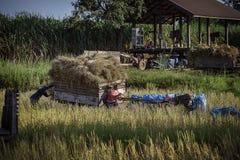 Transporte del grano foto de archivo