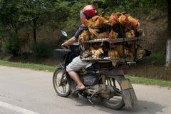 Transporte del pollo Imagen de archivo