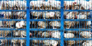 Transporte del pollo Imagenes de archivo