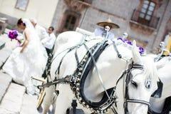 Transporte do casamento com cavalos imagens de stock royalty free