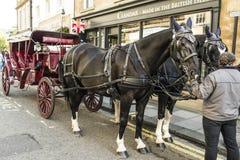 Transporte do cavalo Fotografia de Stock
