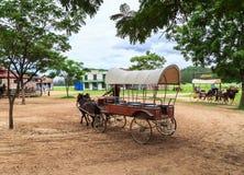 transporte do cavalo de equitação da mostra da autoridade imagem de stock royalty free
