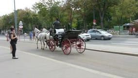 Transporte do cavalo no anel em Viena, Áustria vídeos de arquivo