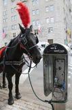 Transporte do cavalo perto do Central Park na 59th rua em Manhattan Foto de Stock Royalty Free