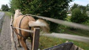 Transporte do cavalo que vai após a vila vídeos de arquivo