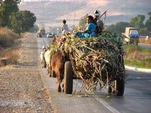 Transporte do fazendeiro imagem de stock royalty free
