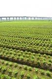 Transporte e agricultura Foto de Stock