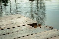 Transporte en balsa en la charca con una rana a bordo Foto de archivo libre de regalías